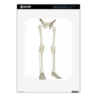 Bones of the Lower Body 2 iPad 3 Decals