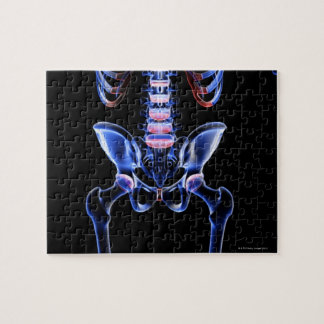 Bones of the Lower Body 4 Jigsaw Puzzle