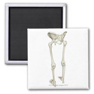 Bones of the Lower Body 5 Magnet