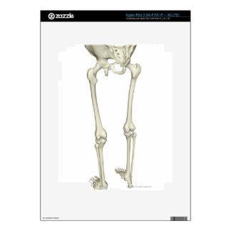 Bones of the Lower Body 5 Skin For iPad 3