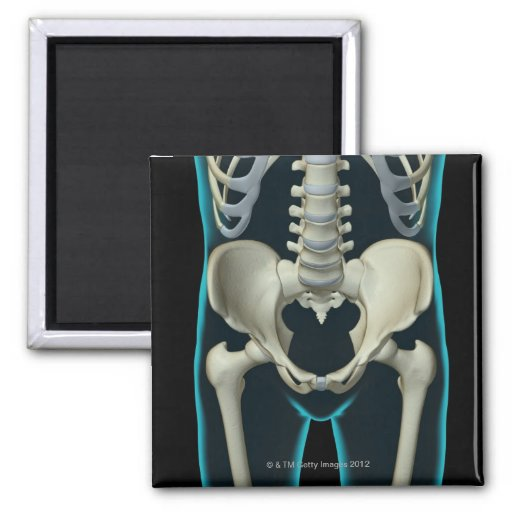 Bones of the Lower Body Magnet