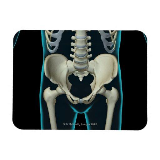 Bones of the Lower Body Rectangular Magnets