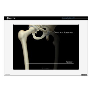 "Bones of the Lower Limb 15"" Laptop Decal"
