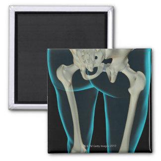 Bones of the Lower Limb 2 2 Inch Square Magnet