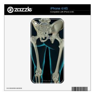 Bones of the Lower Limb 2 iPhone 4 Decal