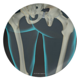 Bones of the Lower Limb 2 Plates