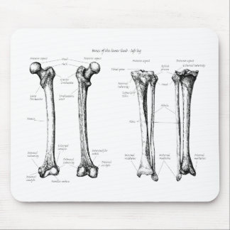 Bones of the Lower Limbs Mouse Pad
