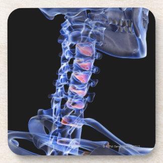 Bones of the Neck 3 Beverage Coaster