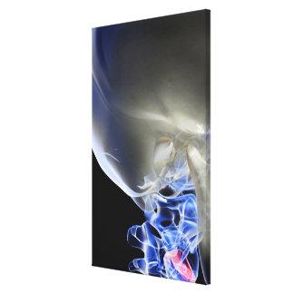 Bones of the Neck 3 Canvas Print