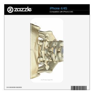 Bones of the Neck 4 iPhone 4S Skins