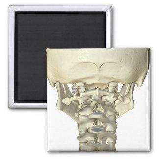 Bones of the Neck 4 Magnet