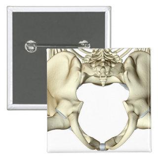 Bones of the Pelvis 4 Button