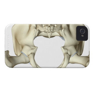 Bones of the Pelvis 4 iPhone 4 Cover