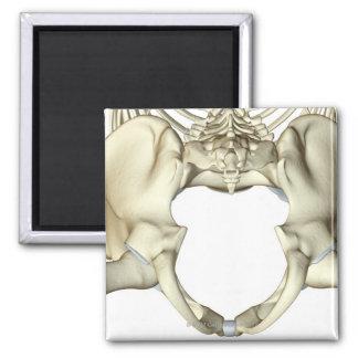 Bones of the Pelvis 4 Magnet