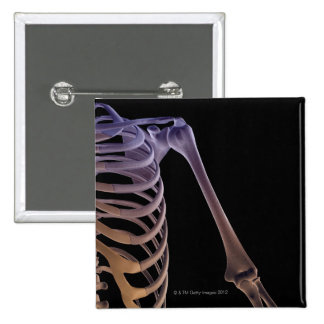 Bones of the Shoulder Pinback Button