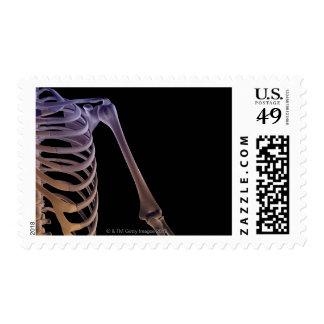 Bones of the Shoulder Postage Stamp