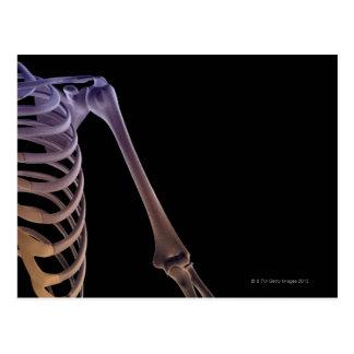 Bones of the Shoulder Postcard