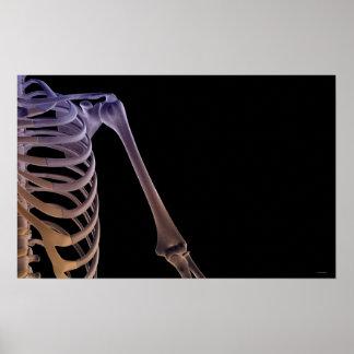 Bones of the Shoulder Print
