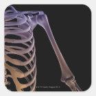 Bones of the Shoulder Square Sticker