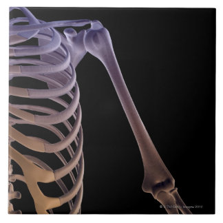 Bones of the Shoulder Ceramic Tile
