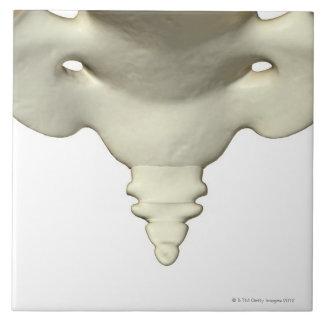 Bones of the Tail Bone Tile
