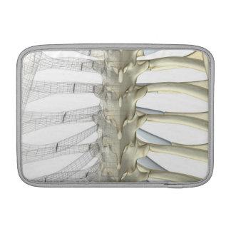 Bones of the Thoracic Vertebrae 2 MacBook Air Sleeve