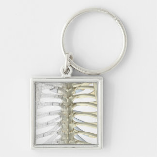 Bones of the Thoracic Vertebrae 2 Keychain