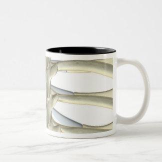 Bones of the Thoracic Vertebrae 2 Two-Tone Coffee Mug