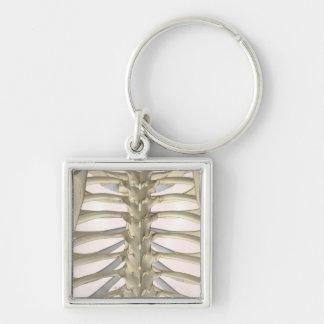 Bones of the Thoracic Vertebrae Keychain