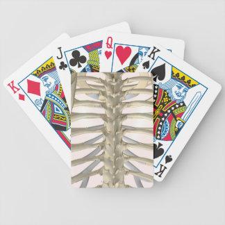 Bones of the Thoracic Vertebrae Poker Cards