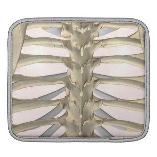Bones of the Thoracic Vertebrae Sleeve For iPads