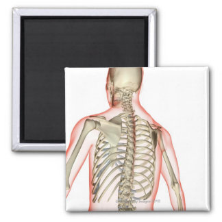 Bones of the Upper Body 3 Magnet