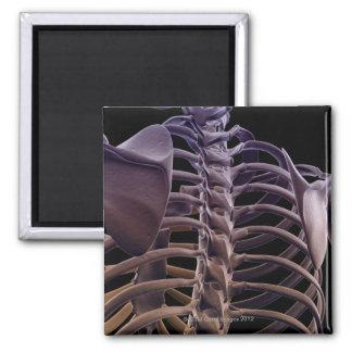 Bones of the Upper Body 4 Fridge Magnets