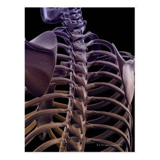 Bones of the Upper Body 4 Postcard