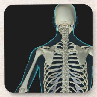 Bones of the Upper Body 5 Coasters