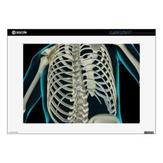 "Bones of the Upper Body 6 Decals For 15"" Laptops"