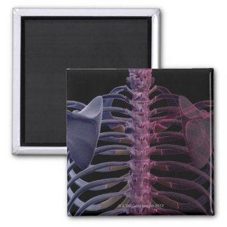 Bones of the Upper Body 7 2 Inch Square Magnet