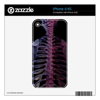 Bones of the Upper Body 7 Decals For iPhone 4