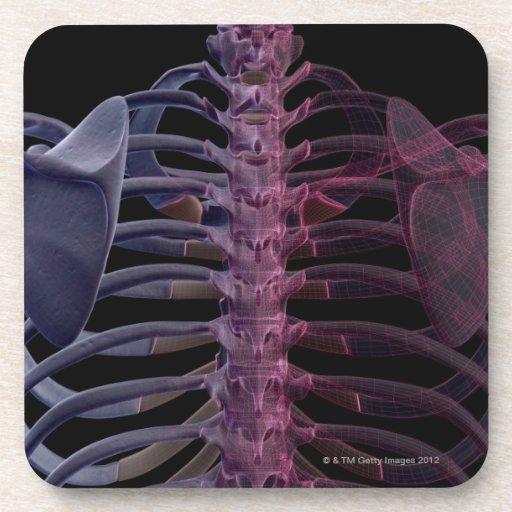 Bones of the Upper Body 7 Drink Coaster