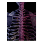 Bones of the Upper Body 7 Postcard