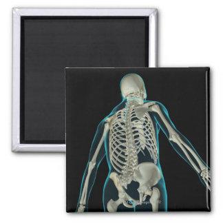 Bones of the Upper Body 8 Magnet