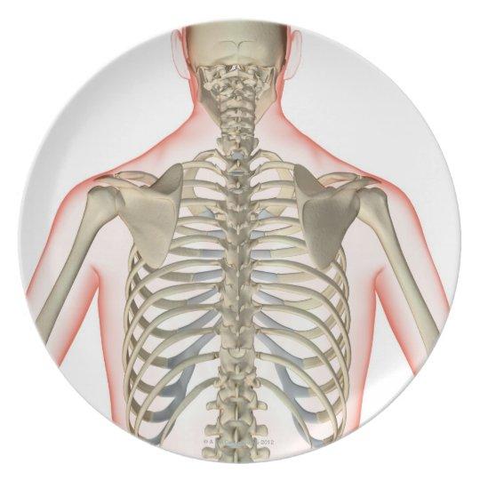 Bones of the Upper Body Melamine Plate