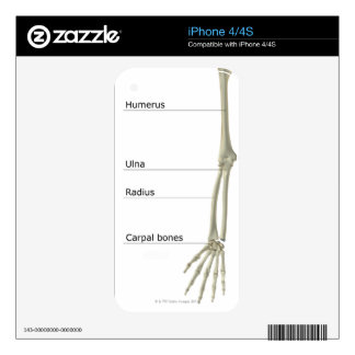 Bones of the Upper Limb Skin For The iPhone 4
