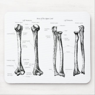 Bones of the upper limbs mouse pad
