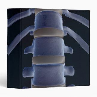 Bones of the Vertebral Column 2 3 Ring Binder