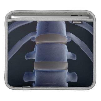 Bones of the Vertebral Column 2 Sleeve For iPads