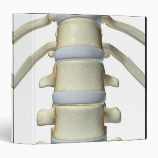 Bones of the Vertebral Column Binder