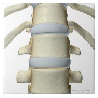Bones of the Vertebral Column Ceramic Tile