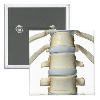 Bones of the Vertebral Column Pinback Button