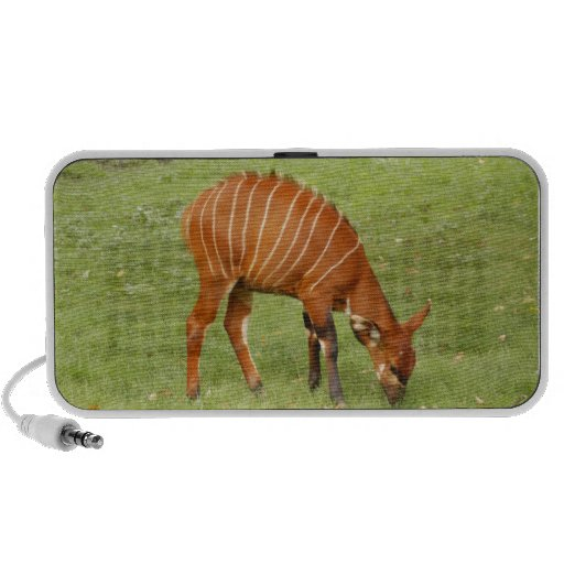 bongo africano 5 altavoz de viajar